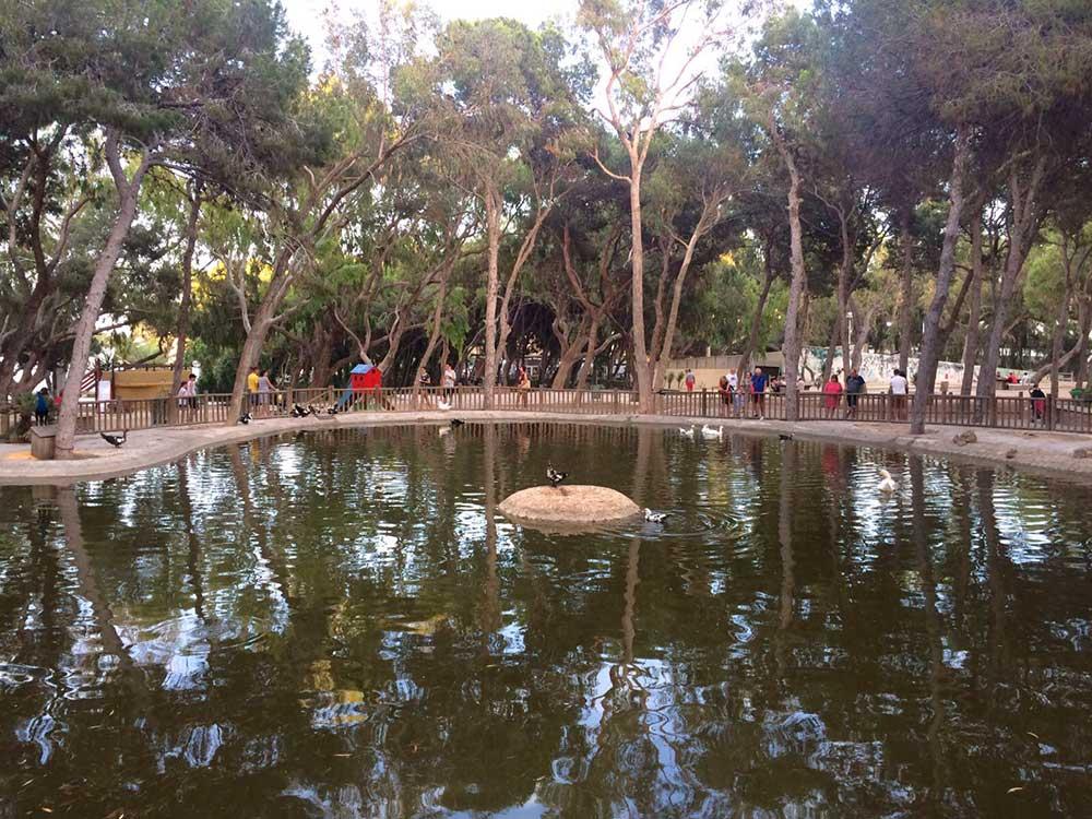Estanque en el Parque Reina Sofia