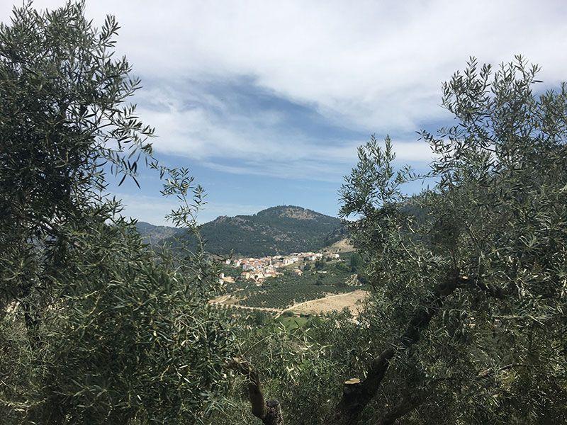 Qué ver en la Sierra de Cazorla, Segura y Las Villas - Olivares de Jaén