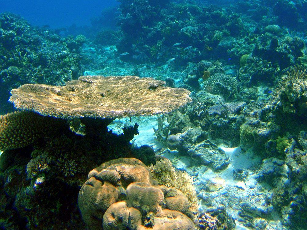Qué ver en Oceanía - Islas Fiji
