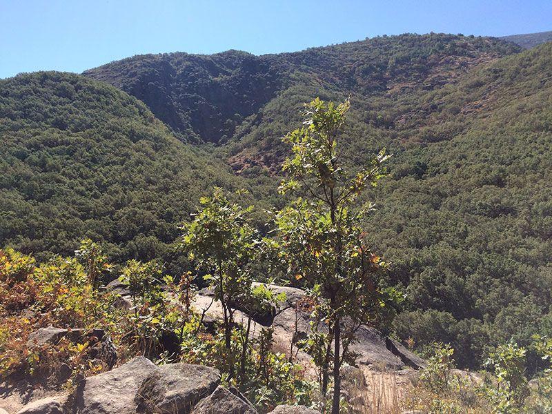 Garganta de los Infiernos - Vistas del Valle del Jerte
