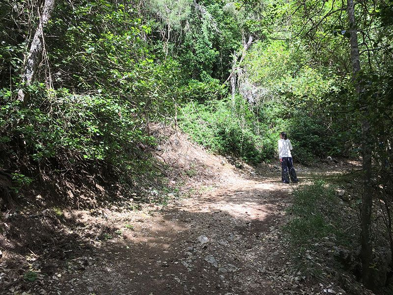 Ruta de senderismo Las Acebeas - Navalperal - Frondosidad a tope