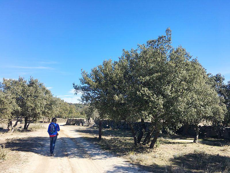 Ruta de senderismo Usos y Oficios Tradicionales - La Cabrera - Madrid - Dehesas