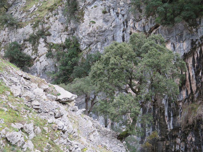 La vegetación se adapta al duro terreno - Ruta del Cares