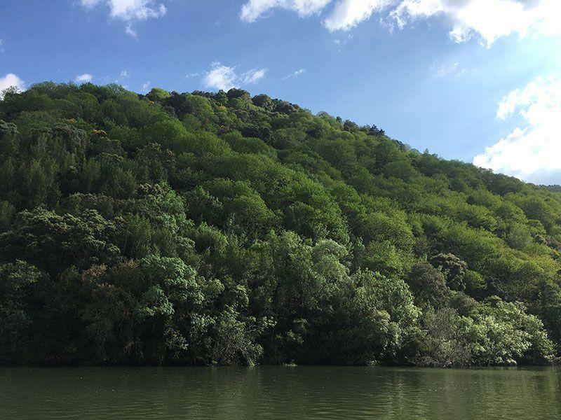 Ruta en barco por el Sil - Ladera soleada del Sil