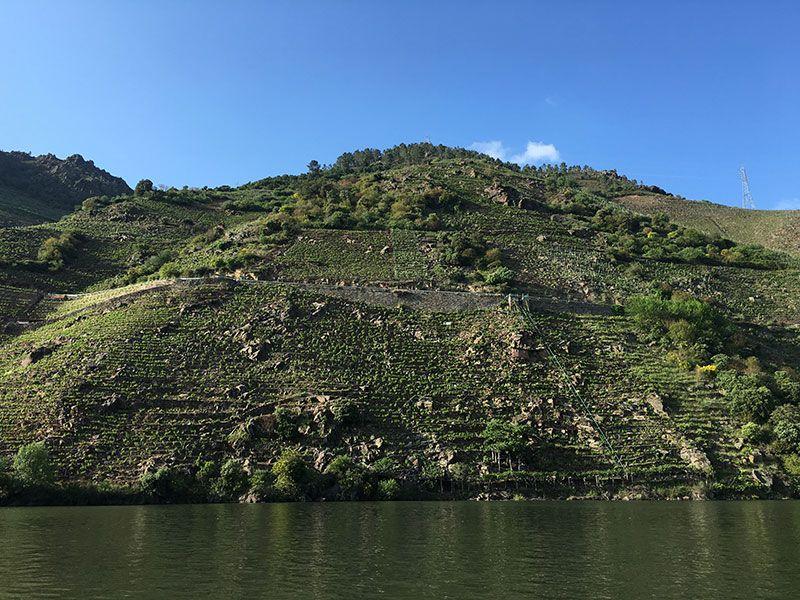 Qué ver en Galicia - Viñas de la Ribeira Sacra