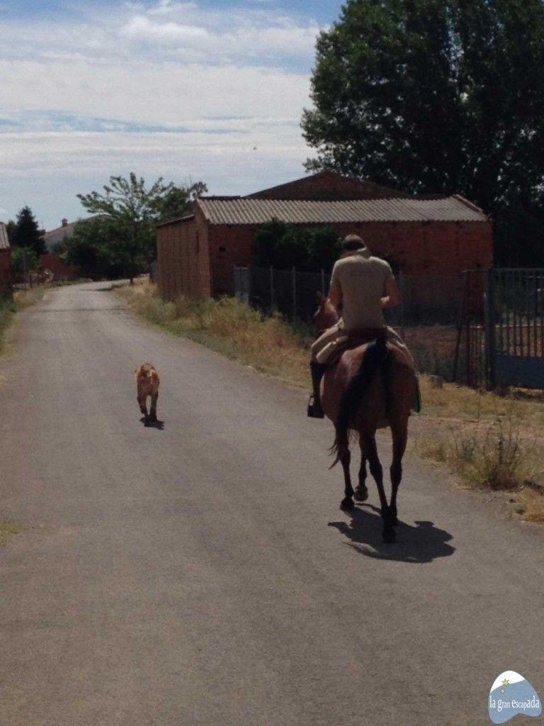 Ruta a caballo. Parque Nacional de Cabañeros