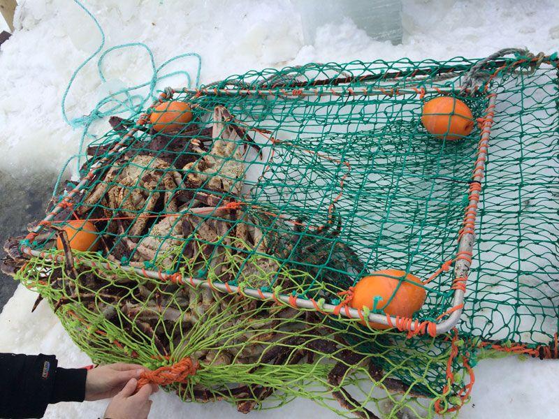 Safari de cangrejo real en Noruega - Red