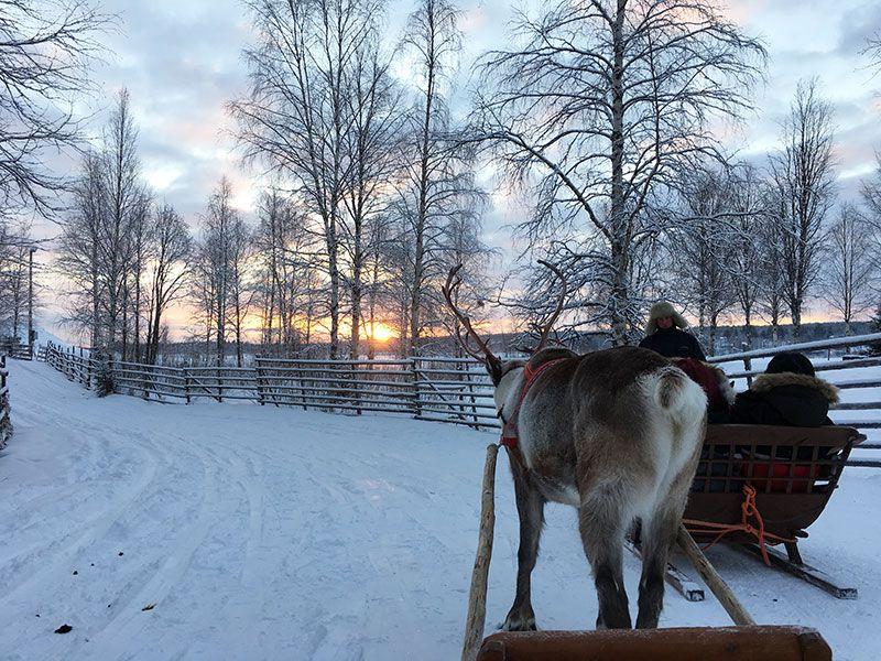 Un día inmersas en Laponia Finlandesa - Paseito en trineo de renos