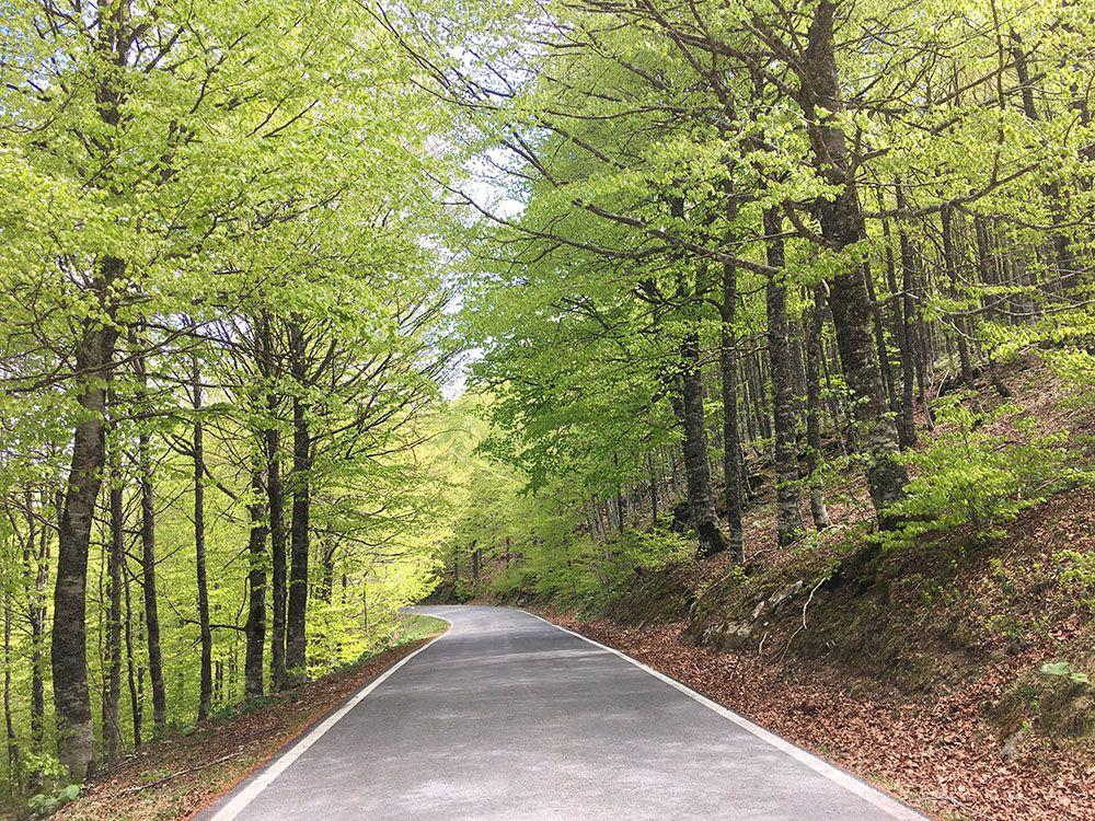 Selva de Irati - Carretera