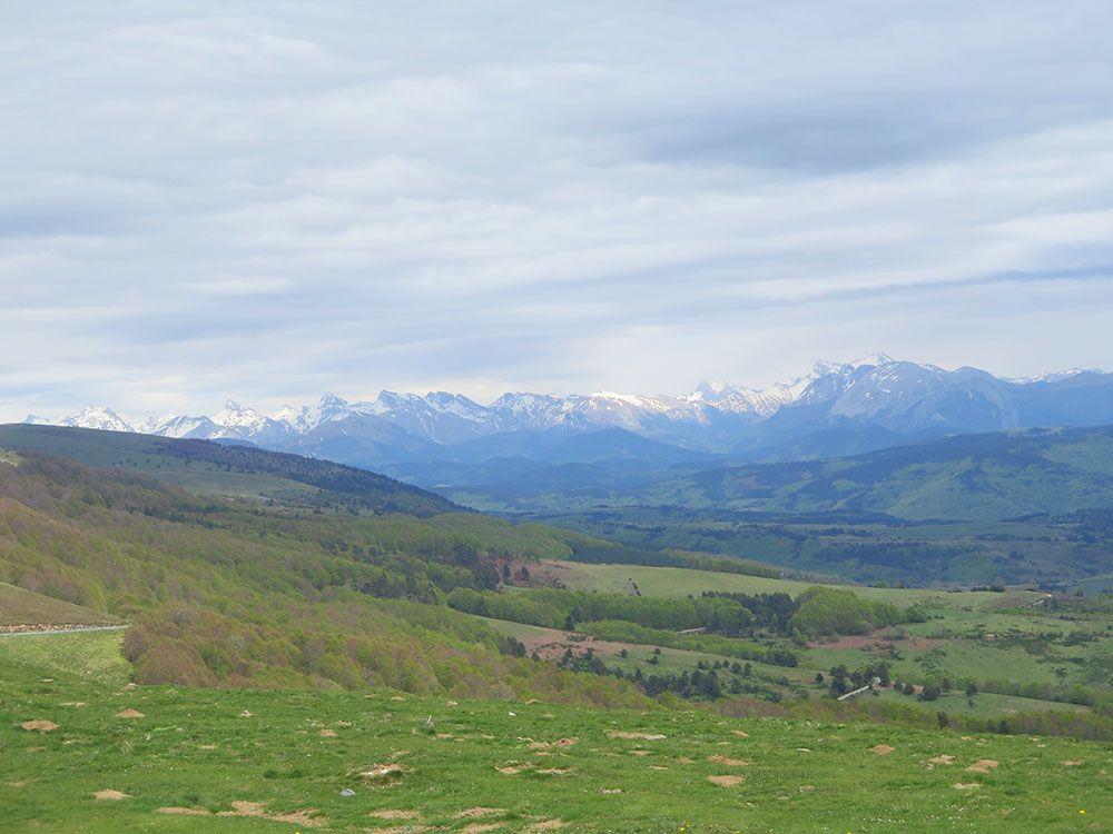 Selva de Irati - Pirineos