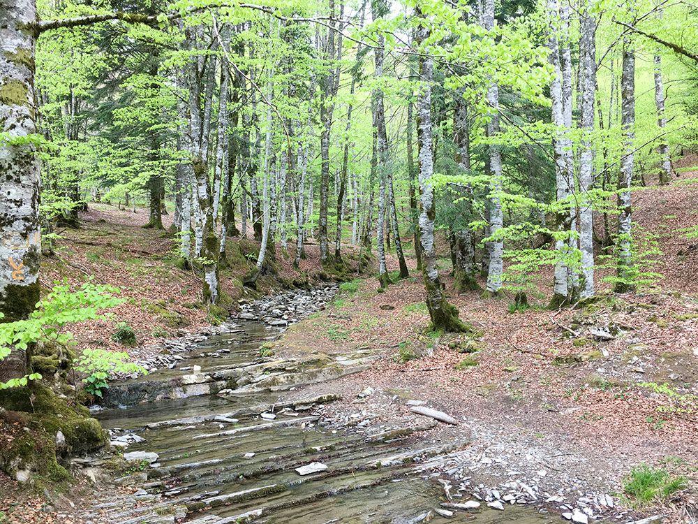 Selva de Irati - Riachuelo