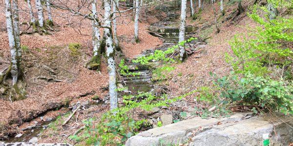 Selva de Irati. El bosque mágico que enamoró a Hemingway