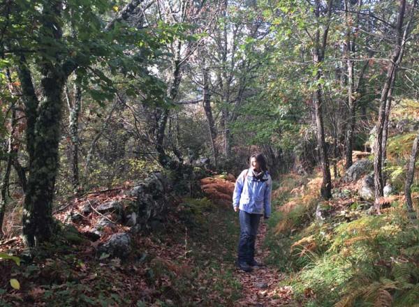 Senderismo por el Lago de Sanabria – Bosques
