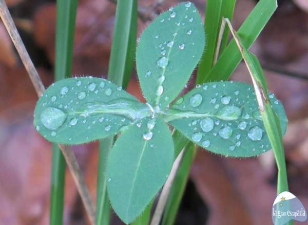Senderismo por el Lago de Sanabria – Flora