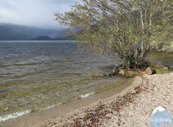 Playa del Folgoso del Lago de Sanabria – Árboles