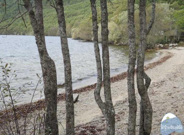 Playa del Folgoso del Lago de Sanabria – A través de los árboles