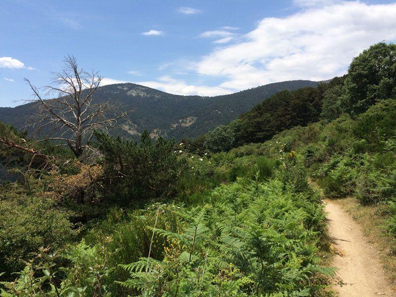 Sendero de bajada con vistas a la pinada Peñota