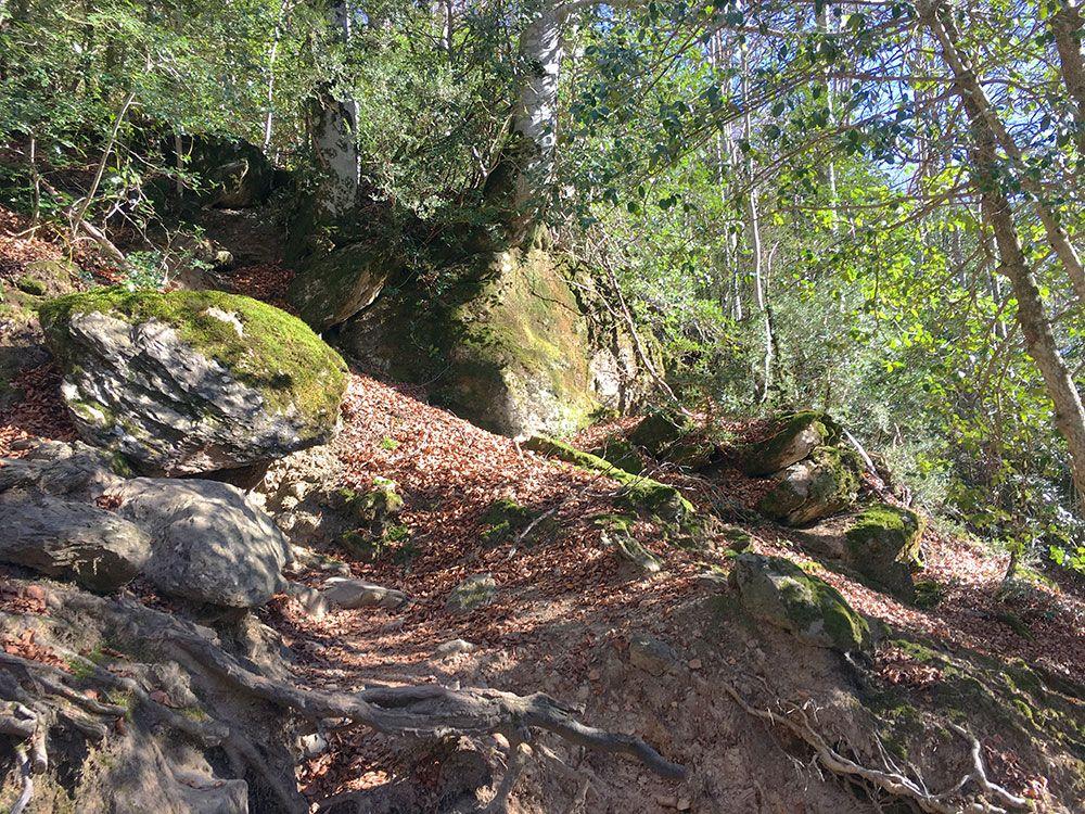 Subida a Los Llanos de La Larri - Senderismo La Pineta - Hayedo