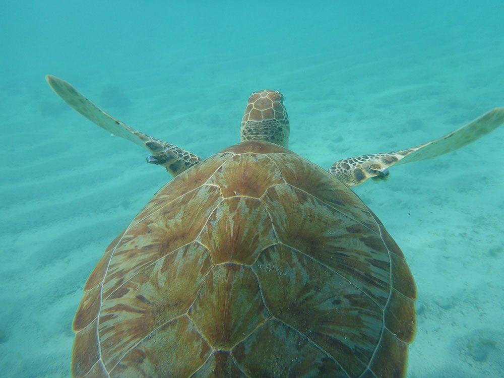 La vida marina de El Caribe es de las más espectaculares del planeta