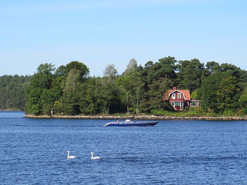 Tour en barco por el Archipiélago de Estocolmo - Cisnes