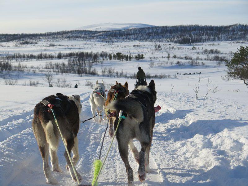 Trineo de perros en Tromsø - Nos vamos de paseo