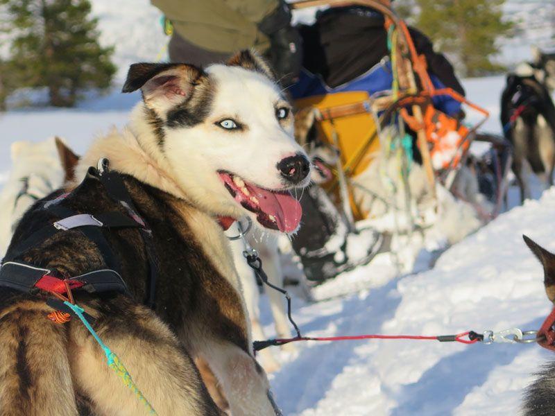 Trineo de perros en Tromsø - Ojazos