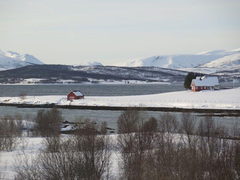 Trineo de perros en Tromsø - Paisajes de Noruega