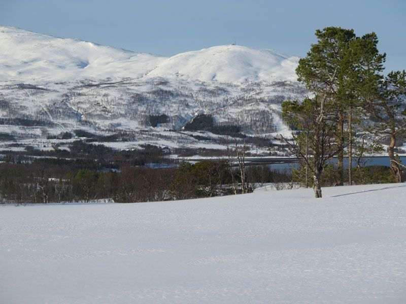 Trineo de perros en Tromsø - Paisajes blancos de Noruega