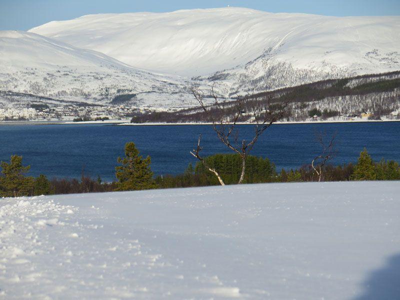 Trineo de perros en Tromsø - Cuánta belleza ofrece la Laponia Noruega!!