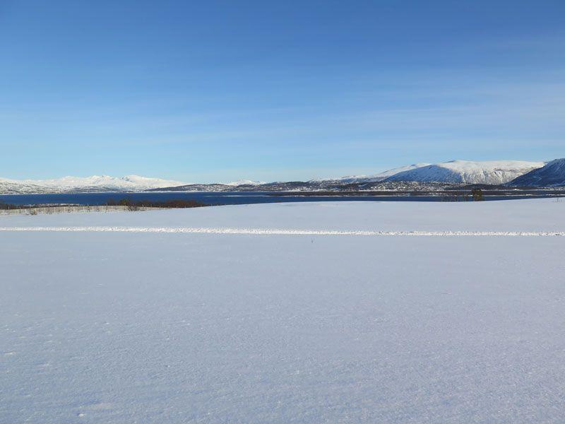 Trineo de perros en Tromsø - Blancos infinitos