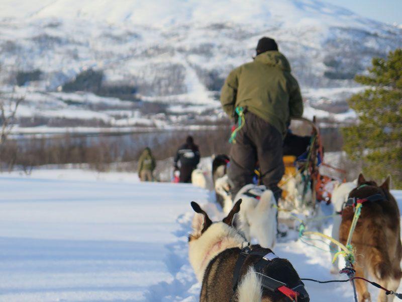 Trineo de perros en Tromsø - Parada en mitad de la travesía
