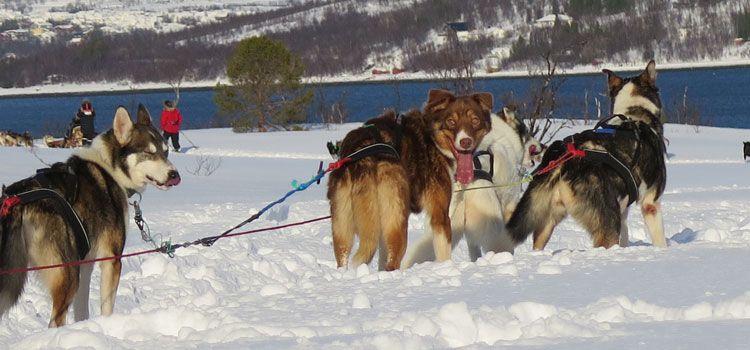 Trineo de perros en Tromsø