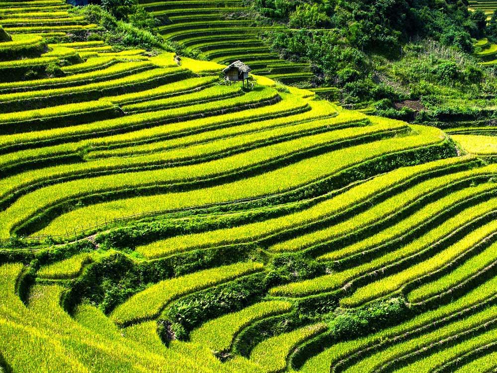 Cómo obtener el visado Vietnam para visitar sus campos de arroz