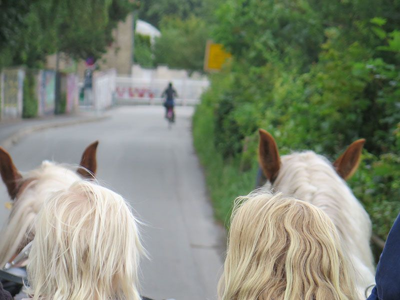 Visita a la fábrica Carlsberg - Copenhague - Horse carriage ride